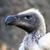:iconviolet-vulture: