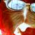 :iconvioletpansy: