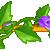 :iconvioletrose2plz:
