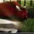 :iconwanderingwolfxx: