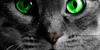 :iconwarrior-cats-craze: