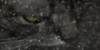 :iconwarrior-cats-images: