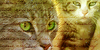:iconwarrior-cats-rpg: