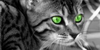 :iconwarrior-cats-x3:
