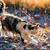 :iconwarriorcats10122: