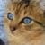 :iconwarriorcatsrusty: