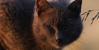 :iconwarriors-cat-fan: