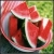 :iconwatermelon-cafr: