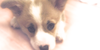 :iconwe-love-corgies:
