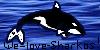 :iconwe-love-sharkos: