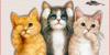 :iconwelovekittensandcats: