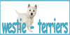 :iconwestie-terriers: