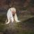 :iconwhildwesthorses: