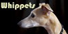 :iconwhippets: