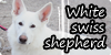 :iconwhite-swiss-shepherd: