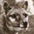 :iconwild-thylacine: