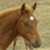 :iconwinged-filly:
