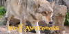 :iconwolf-awareness: