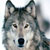 :iconwolf-fighter: