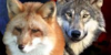 :iconwolf-fox-art: