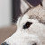 :iconwolf-rik: