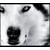 :iconwolf-whisperer: