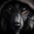:iconwolf1818: