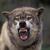 :iconwolfbuddie19: