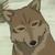 :iconwolfconfusedplz: