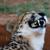 :iconwolfdogart: