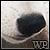:iconwolfenphotography: