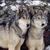 :iconwolfgirl5618: