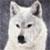 :iconwolfhogen: