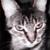 :iconwolfjammer1822:
