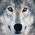 :iconwolfkarono: