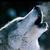 :iconwolfofsummer: