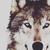:iconwolfpack1024:
