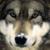 :iconwolfrazor23: