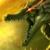 :iconwolfsaint:
