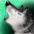 :iconwolfsong--at--heart:
