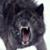 :iconwolfurius: