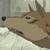 :iconwolfwhaaplz: