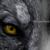 :iconwolfwhisperer111: