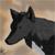 :iconwolfwild13: