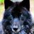 :iconwolfydino: