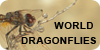 :iconworlddragonflies: