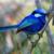 :iconwrenbird13: