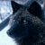 :iconwwwwwolf: