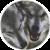 :iconxlunaricewolfx:
