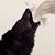 :iconyellwolf: